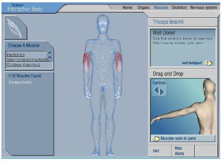 Menschliche Körper Organe online anschauen - Interaktive Körperkunde ...
