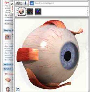 Anatomie des Menschen (Auge, Herz, Nieren, Leber, Magen, Muskeln ...