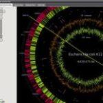 Erbgut (Genom) online betrachten wie mit Google Street-Map – mit Genome Projector