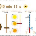 3 Minuten Ei kochen – ein perfekter online Timer – mit der Universität Oslo