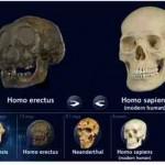 Urmenschen Schädel in 3D – mit 3D Hominid Skulls interactive