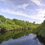 Amazonas Regenwald online besuchen – mit Google Street View