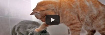 Lustiges Katzenvideo